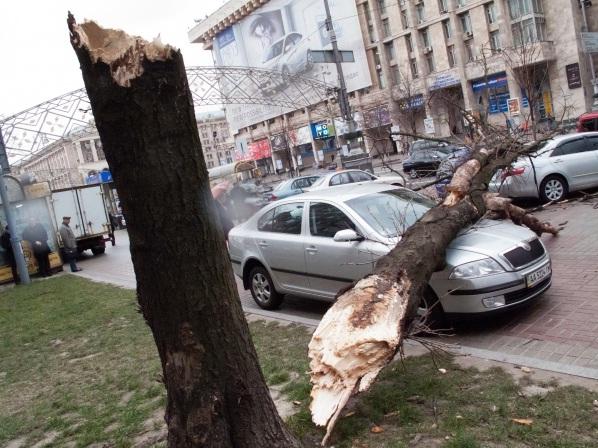 Картинки по запросу упало дерево на машину фото
